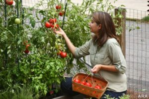 Gardening can teach us life lessons